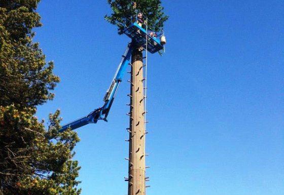 Mono Pine Install