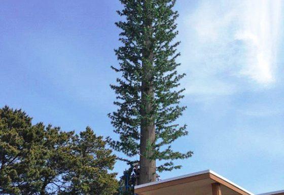 Mono Pine Install 2